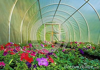 culture de fleur en serre chaude photos libres de droits image 14201488. Black Bedroom Furniture Sets. Home Design Ideas