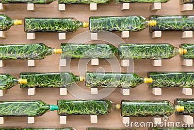 culture de tissu d 39 orchid e dans des bouteilles en verre photo stock image 69010291. Black Bedroom Furniture Sets. Home Design Ideas