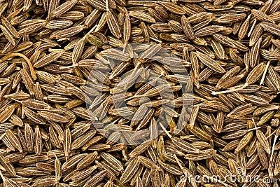 Cumin Seeds (Cuminum cyminum)