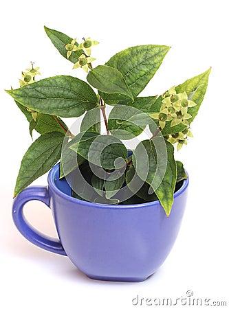 Cup of jasmine Stock Photo