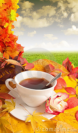 Free Cup Of Tea Stock Photography - 16364422