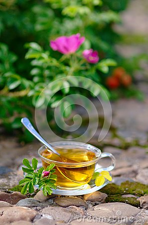 Free Cup Of Tea With Canker-bloom Royalty Free Stock Photo - 25901185