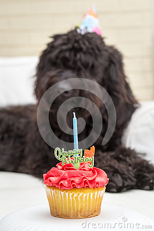 Free Cupcake With Candle And Black Furry Dog Lying On White Chair Wearing A Birthday Party Hat In The Background Royalty Free Stock Photos - 87243978