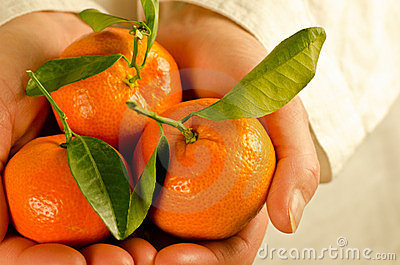 Cupped hands with clementines