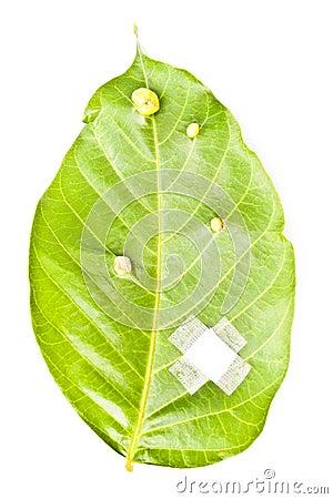 Cure a folha
