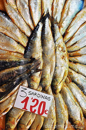 Cured sardines