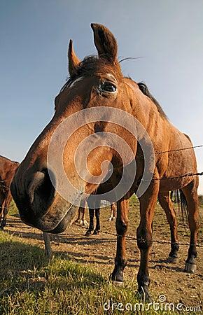 Curious bay horse