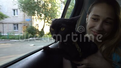 A curious black cat looks out of the window of a fast-moving car sitting on the lap of a young girl in the back seat. The cat looks at people, houses and the stock video footage