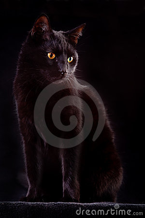 curious black cat spooky night animal bad luck