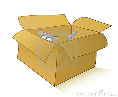 Curious cat in a carton box
