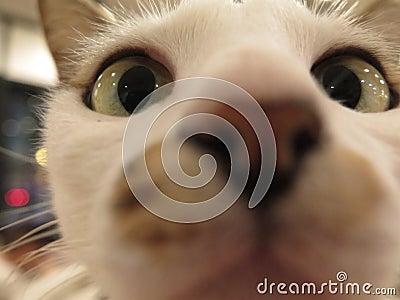 Curious Cat Checks Me Out