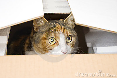 Curious cat hiding in box