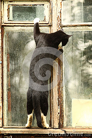 Free Curious Cat In The Window Stock Photo - 45556460