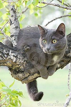 Free Curious Cat On A Tree Royalty Free Stock Photography - 20349137