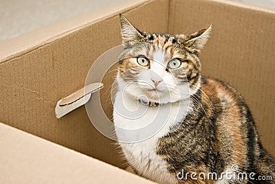 Curious cat sitting in box