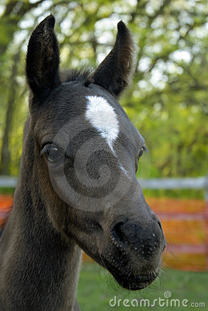 Free Curious Colt Stock Images - 779804