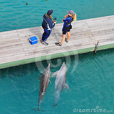 Curious dolphins in pool watching trainer Editorial Stock Image