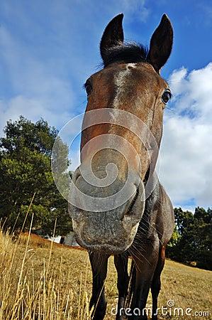 Curious horse