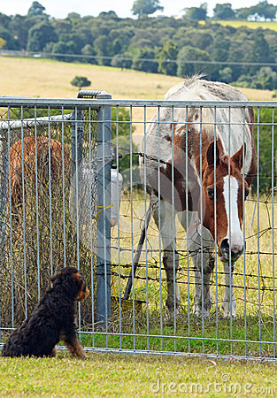 Curious horse checking out the neighbour puppy dog