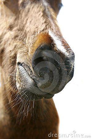 Curious horse nose