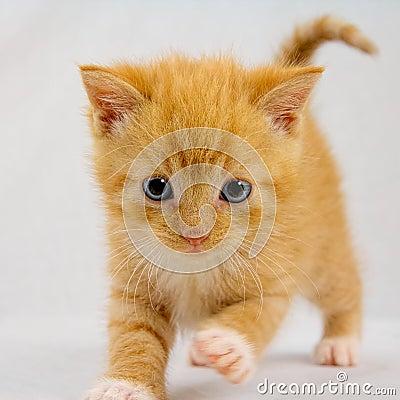 Free Curious Kitten Stock Photo - 33121050