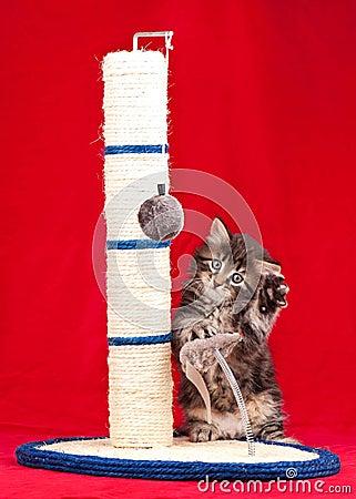 Free Curious Kitten Royalty Free Stock Photo - 38423325