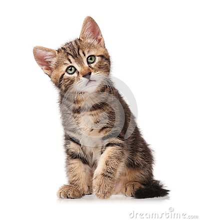 Free Curious Kitten Stock Images - 41691154