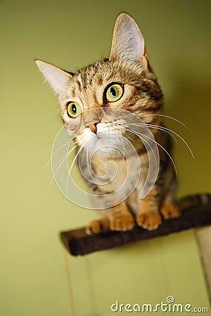 Free Curious Kitten Royalty Free Stock Image - 7515106