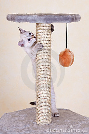 Free Curious Kitten Playing Royalty Free Stock Images - 16376489