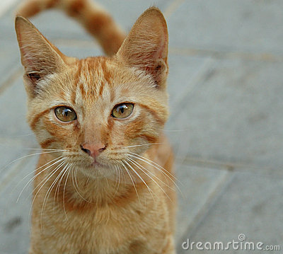 Free Curious Kitty Stock Photography - 243132