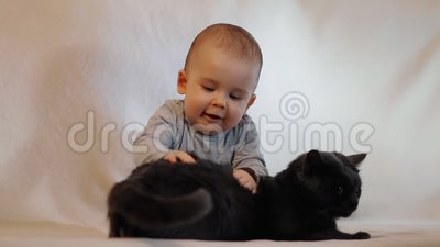 Curious little cheerful child playing with a cat. HD stock footage