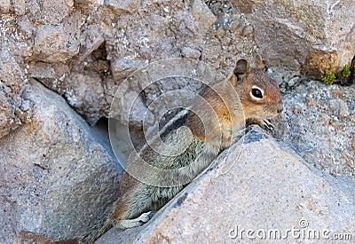 Curious little chipmunk