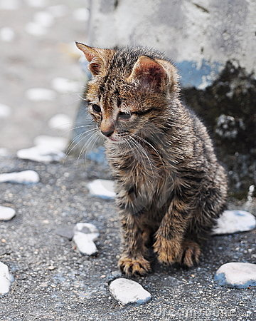 Free Curious Little Kitten Royalty Free Stock Image - 7655196
