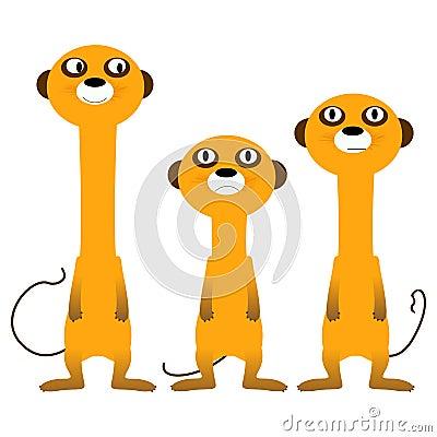 Curious meerkats