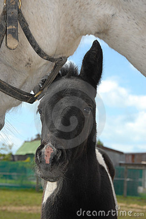 Curious new born foal close up