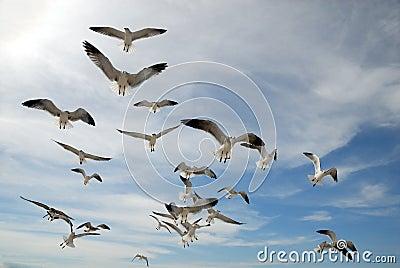 Curious seagulls