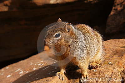 Curious Squirrel 2