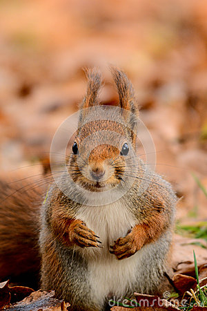 Free Curious Squirrel Stock Photo - 46590620
