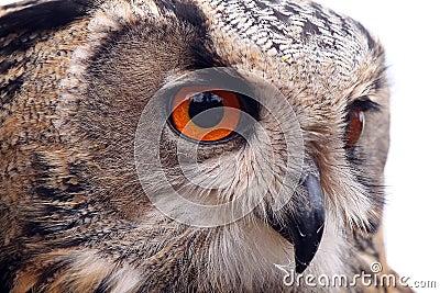 Curious Watcher