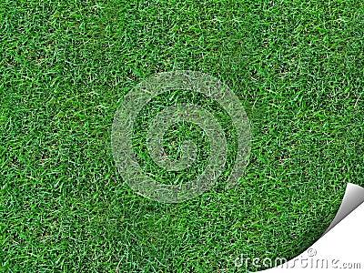 Curl of grass
