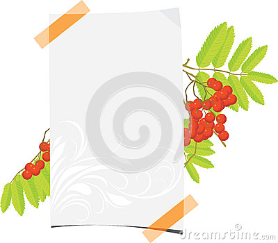 Curled paper sheet with rowan branch