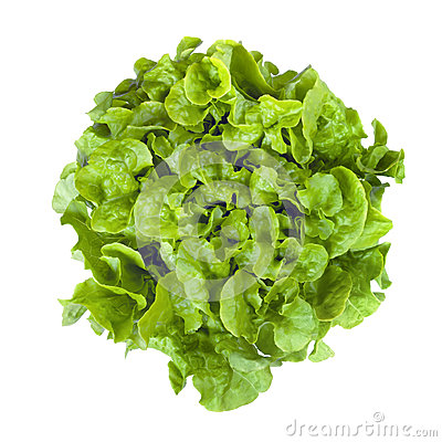 Curly Leaf lettuce Isolated