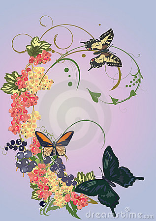Currant and butterflies illustration