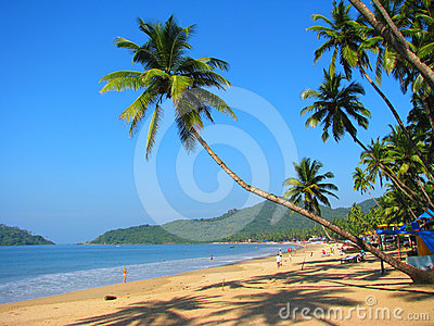 Curved palm on Palolem beach, Goa, India