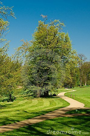 Curved path with a tree