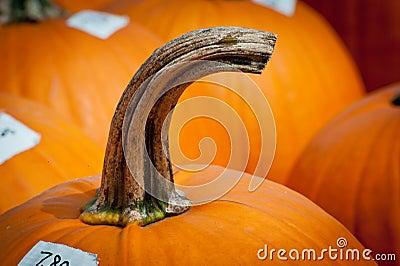 Curved pumpkin stem