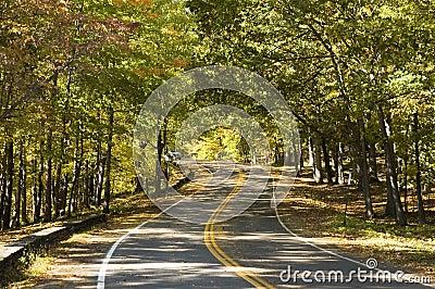 Curvy Road
