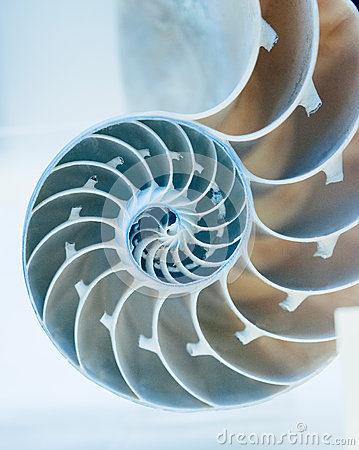 Free Cut Away Of Nautilus Shell Stock Image - 38875281
