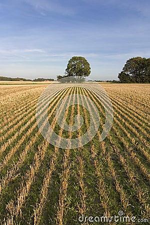 Cut field Stock Photo