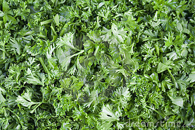 Cut fresh green parsley.